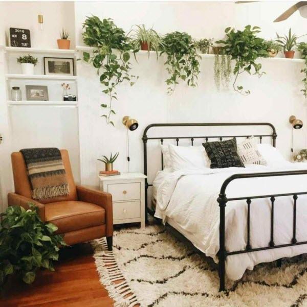 Cây cảnh tốt cho phòng ngủ: Thường xuân